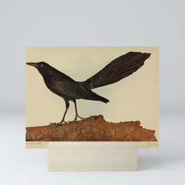 Great tailed Grackle quiscalus macrourus4 Mini Art Print