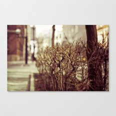 Low POV 1 Canvas Print