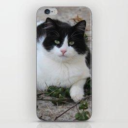 Playful Tuxedo Kitten iPhone Skin