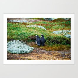 Magellanic Penguins in Love Art Print