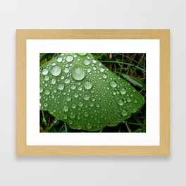 'Ginko' Framed Art Print