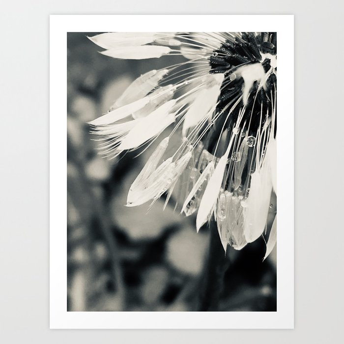 Black & White Dandelion 1, Art Print