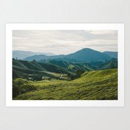 Tea Fields Art Print