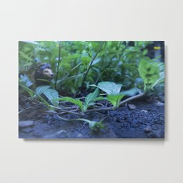 The Lion and the Snail Metal Print