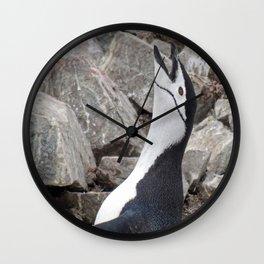 Chinstrap Penguin Calling Wall Clock