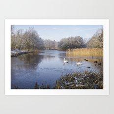 Swans on snowy lake. Art Print