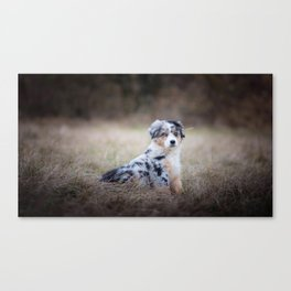 Serious dog in the field Canvas Print