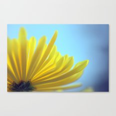 Yellow Chrysanthemum 301 Canvas Print