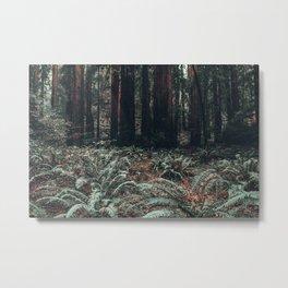 Muir Woods in California Metal Print
