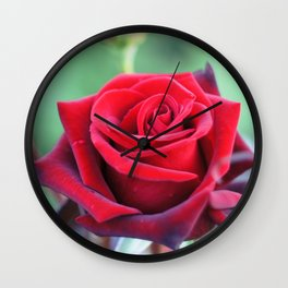 Roses on the city flowerbed. Wall Clock