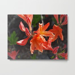 Fiery Blooms Metal Print