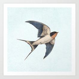 Barn Swallow - option Art Print