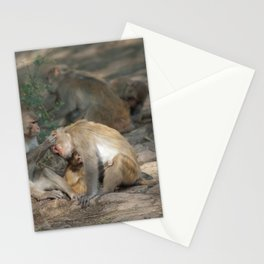 Rhesus macaques grooming.  Stationery Cards