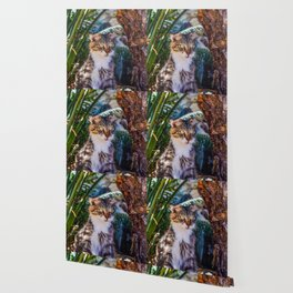 Funny Kitty Cat Wallpaper