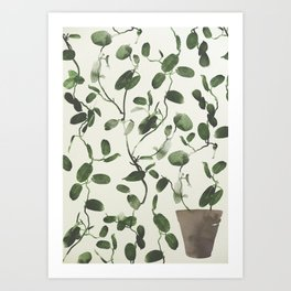 Hoya Carnosa / Porcelainflower Art Print