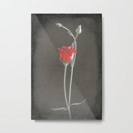 Red Lisianthus on Black  Metal Print