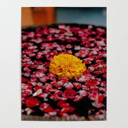 A Marigold In Indonesia Poster