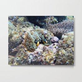 Fish in Sea Anemone Metal Print