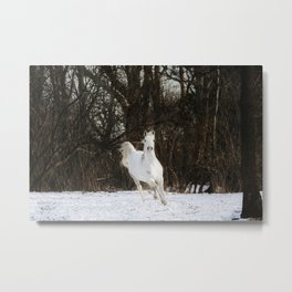 White arabian horse in the snow Metal Print