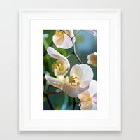 orchid Framed Art Prints featuring Orchid by Joke Vermeer