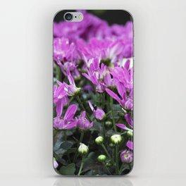 Longwood Gardens Autumn Series 219 iPhone Skin