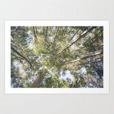 woodland 3424 Art Print