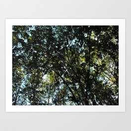 Through the trees #3 Art Print