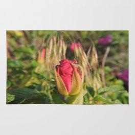 Cape Rose Bud Rug