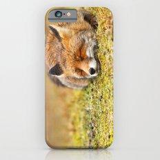 Comfortably Fox (red fox sleeping) iPhone 6 Slim Case