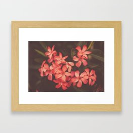 Coral Tales Framed Art Print