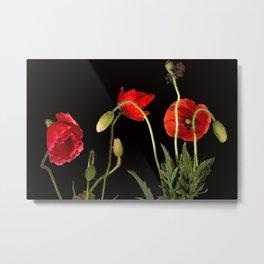 Vibrant Red Poppies  Metal Print