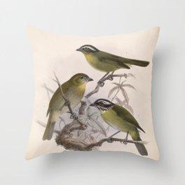 chlorospingus punctulatus Sooty capped Bush Tanager chlorospingus hypophaeus4 Throw Pillow