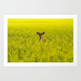 Buck in Canola Art Print