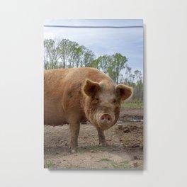 Pomaria Pig Metal Print