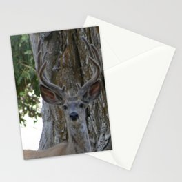 Mule-tail Deer, Buck in Velvet Stationery Cards