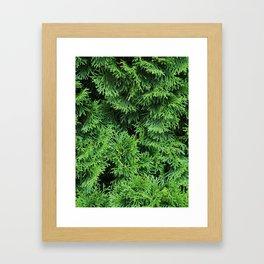 Ever Green Framed Art Print