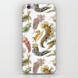 Ernst Haeckel - Nudibranchia (Snails) iPhone Skin