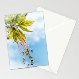 Maple boxelder tree catkin blossom pollen on branch in spring Stationery Cards
