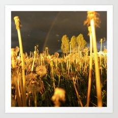 Rainbow Thunderstorm Sunset Through a Field of Dandelions Art Print
