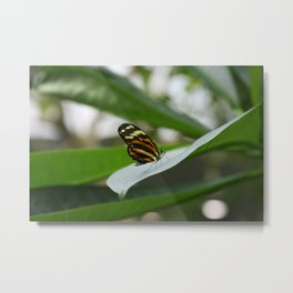 Butterfly House 3 Metal Print