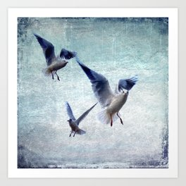 Gulls In Flight Art Print