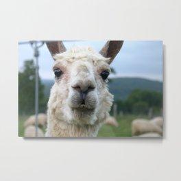 Hey, Llama Metal Print