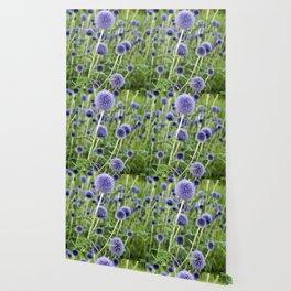 BLUE FLOWERHEADS - Botanical Garden Wallpaper