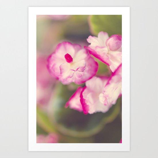 Begonia Gum Drop Art Print