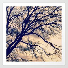 Naked Trees Art Print