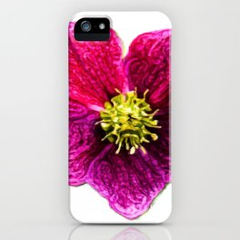 Hellebores Christmas Rose | Painting  iPhone Case