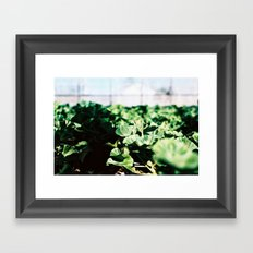 Greens in the Greenhouse Framed Art Print
