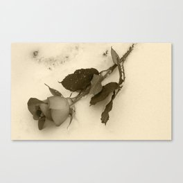 A lone rose resting in the snow Canvas Print