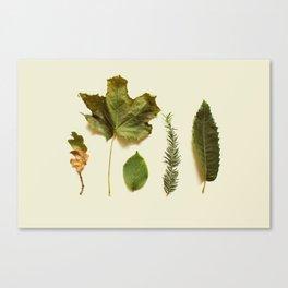 COMPOSIZIONE FOGLIE I Canvas Print