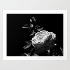 Rose - Black & White Art Print